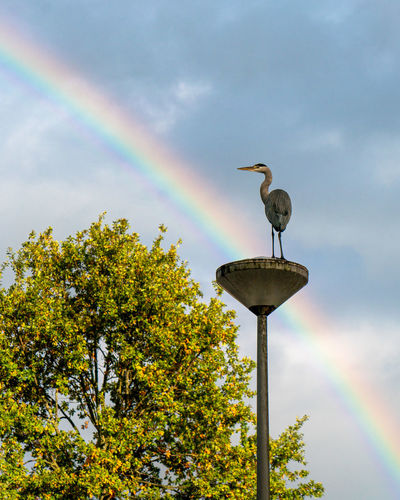 Low angle view of bird perching on tree against rainbow
