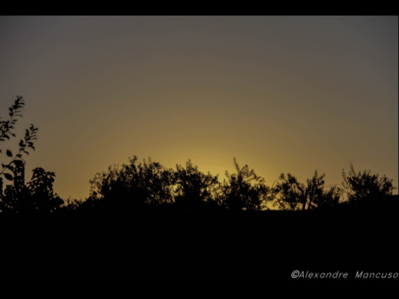silhouette, sky, tree, sunset, beauty in nature, plant, nature, tranquility, scenics - nature, no people, tranquil scene, copy space, outdoors, growth, clear sky, land, landscape, environment, non-urban scene, dusk