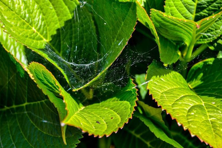 Spider home Holiday Plants 🌱 Love Tapiadecasariego Asturias Paraiso Natural🌿🌼🌊🌞 EyeEm Nature Lover EyeEmNewHere Maturally Sheets🍃 Spider Leaf Plant Part Green Color Close-up Nature Plant Beauty In Nature