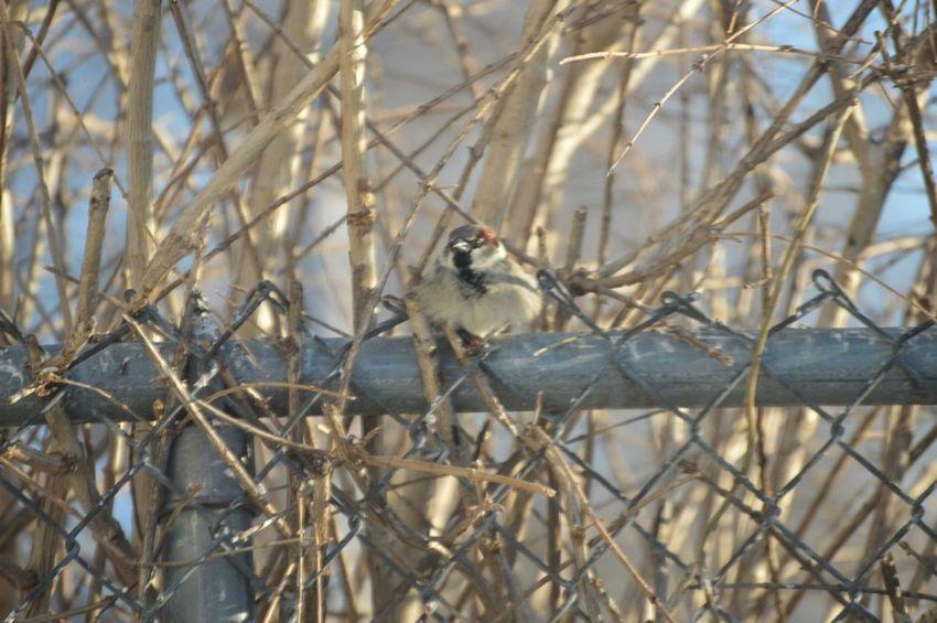 Photography Outdoors In Back Yard Little Bird Urban Birds Bird Photography