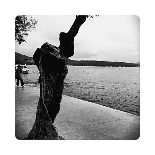 Bosluk Ağaçkovuğu Siyahbeyaz Istanbulmanzaraları Istanbul Sahil Blackwhite Monokram Mono Sea Silence