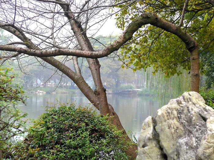 Chinese Art Chinese Landscape Tree Arranged Flowers Arranged Objects Beauty In Nature Branch Chinese Garden Chinese Landscape Architecture Day Growing Plants Lake Lake View Nature No People Outdoors Scenics Sky Traditional China Traditonal Tree Tree Art Tree Trunk Water Waterfall Colour Your Horizn