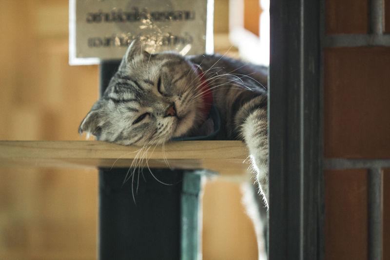 Portrait of a cat relaxing on window