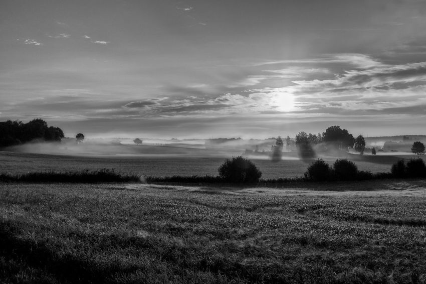 Agriculture Fieldscape Beauty In Nature Black And White Black And White Friday Cloud - Sky Day Field Grass Idyllic Landscape Mist Misty Morning Monochrome Nature No People Outdoors Rural Scene Scenics Sky Sunrise Sunset Tranquil Scene Tranquility Tree