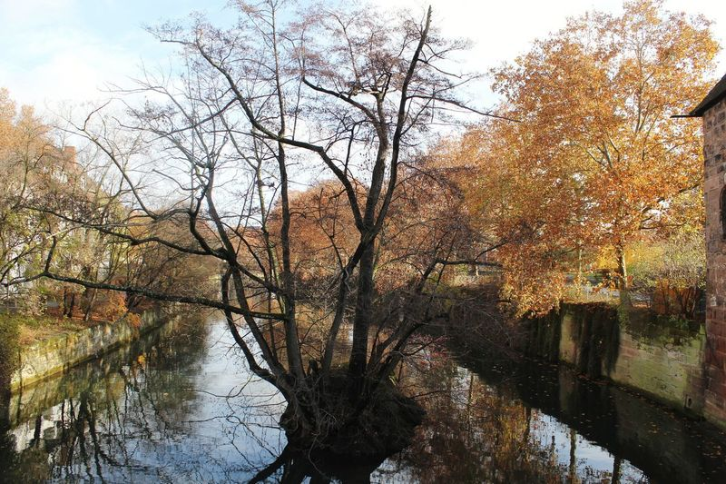 Nature City Europe Place Blue Sky Blusky Oldcity Nuremberg Germany Tree Water Branch Lake Sunlight Reflection Sky Calm Lakeside Cloud