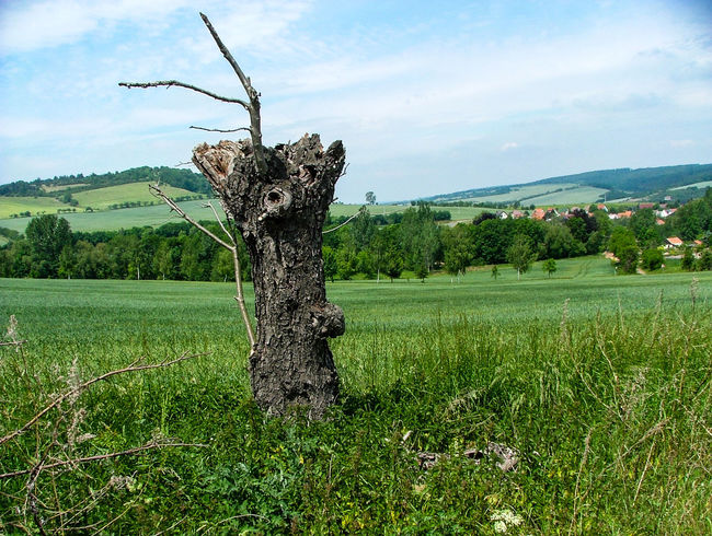 Deadwood  Beauty In Nature Dead Trees Landscape Nature Outdoors Snag Tree Tree