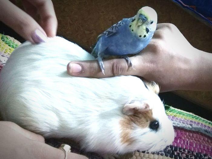 Pets Friendship