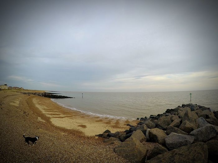 Dog Sea Beach