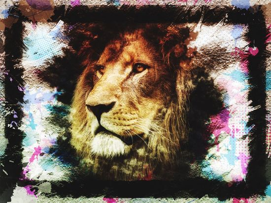 Human Body Part Nature Pets Domestic Animals Animal Themes One Animal Portrait Lion - Feline Close-up Outdoors