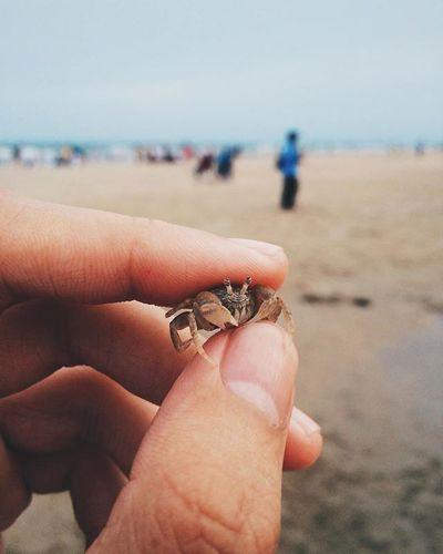 Dude, I wanna go back 😔 VSCO Vscocam Vscogrid Vscovungtau Iphone5s IPhoneography Photooftheday Instagood Somewhereinvungtau Vungtau Beautiful Beach Creature