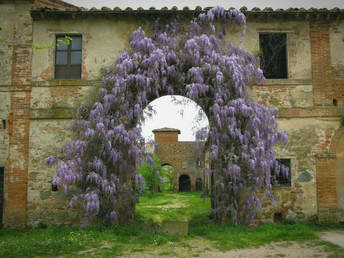 Smart Simplicity Peaceful Place Glycine Springtime Bites Tuscany Countryside