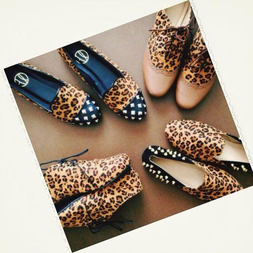 Leopard overload