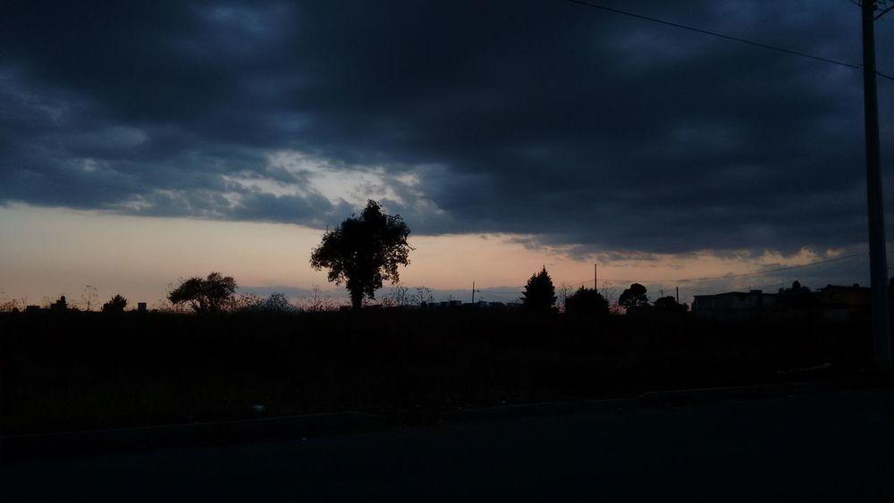 Tree Nature Sun Beauty In Nature Storm Cloud Cloud - Sky Sky Nature Street Photography