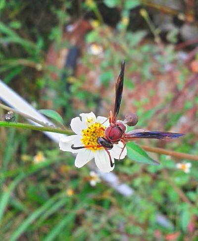 As coisas de Deus são Perfeitas... Abelhas Abelhas Vespoes Beauty In Nature Brasil ♥ Coisa De Deus Flower Insetosdobrasil Peruíbe Polinization Wasp Nest Wasp Wasp Macro