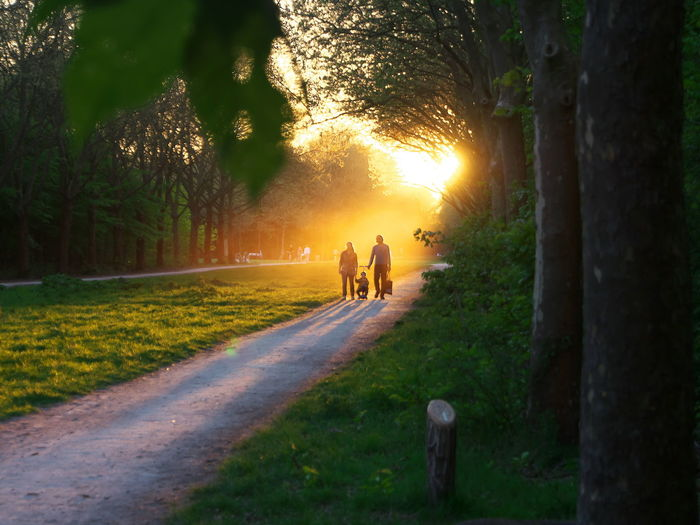 People walking on footpath by trees during sunset