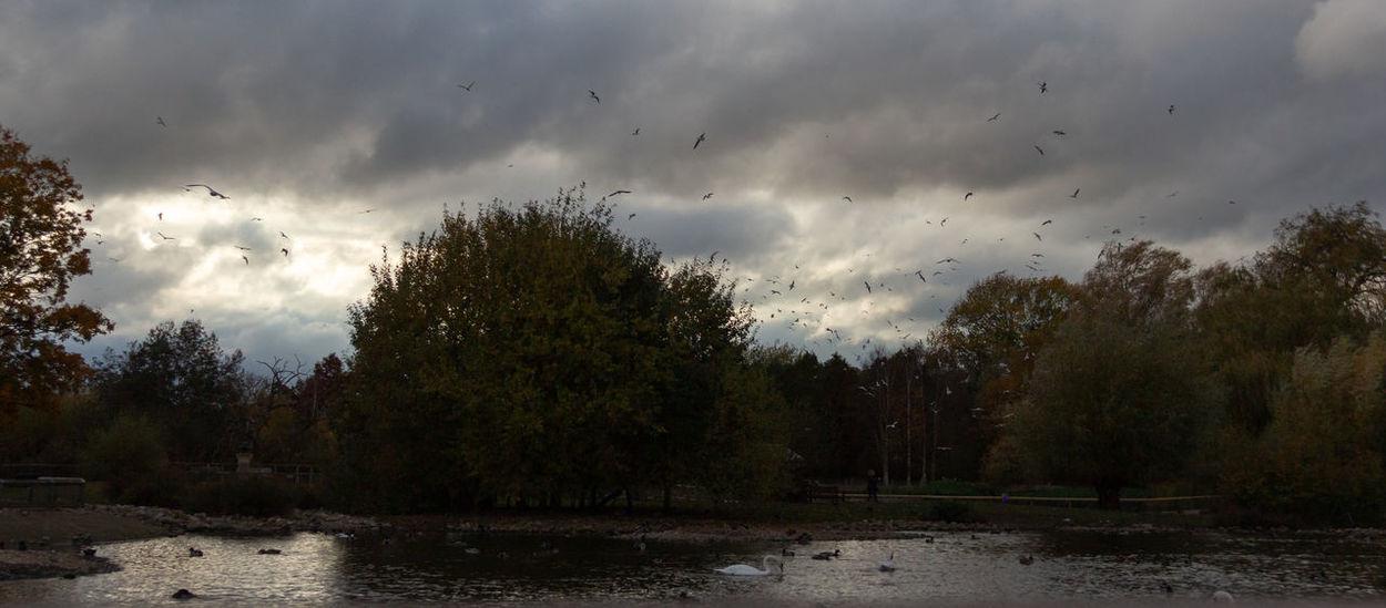Bird Tree Cloud - Sky Sky Water Flying Flock Of Birds Outdoors