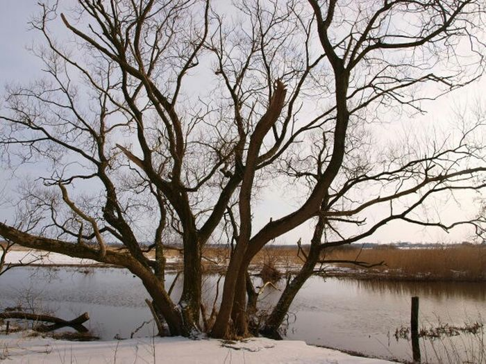 Winter Trees Contrast Naked Trees Branches Nature Snow Calm