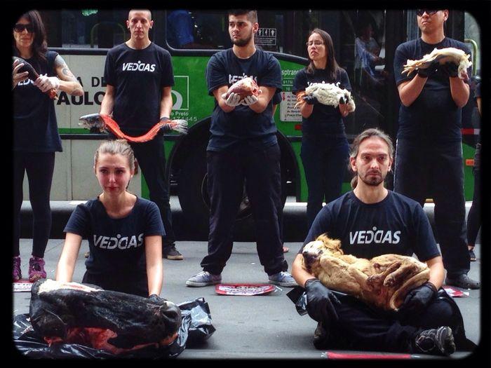 10 de Dezembro: Dia Internacional dos dereitos animais. @veddas Os animais sentem medo, dor, angustia, tristeza, solidão,forme, sede e alegria. E não estamos falando apenas de cães e gatos. Porcos, vacas, cavalos, e peixes são caes capazes de sofrer e sentir assim como nós. Vegan Vegetarian Popckorn Save The World