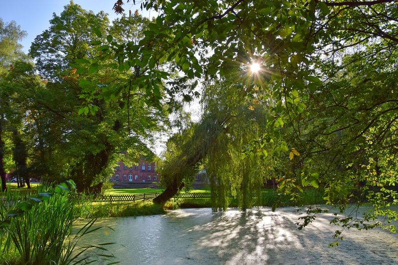 Manor House Gardens Pond Radensleben Beauty In Nature Day Flower Grass Growth Idyllic Idyllic Scenery Light And Shadow Nature No People Outdoors Park Rural Scene Scenics Sky Summer Sun Sunlight Tranquil Scene Tranquility Tree Water