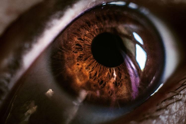 Eyeball Eyelash Eyesight Human Body Part Human Eye One Person Real People Sensory Perception