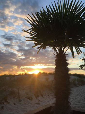 Baltic Sea Sunbeam IPhone X Photography IPhone X Palm Sunset Sky Tree Plant Nature Palm Tree Tropical Climate Cloud - Sky Beauty In Nature No People Growth Tranquil Scene Outdoors Tranquility Land Sunlight Scenics - Nature Silhouette Water Sun