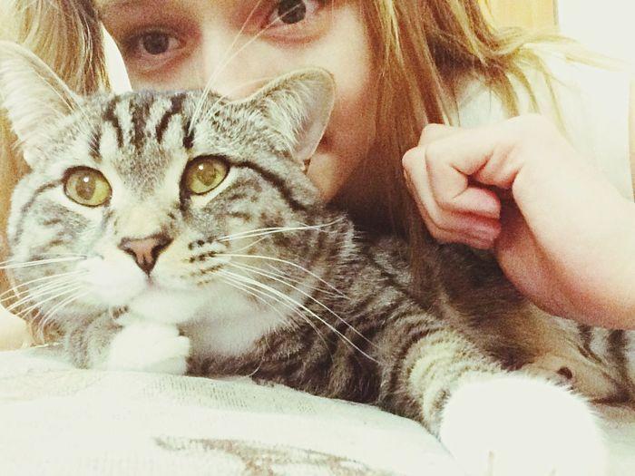 Pets моя киса Domestic Cat