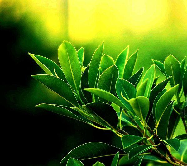 Love In Green First Eyeem Photo