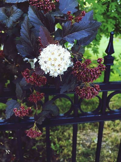 One in a Million. Flower Growth Nature Freshness Leaf No People Red Outdoors Day Beauty In Nature Fragility Close-up Flower Head