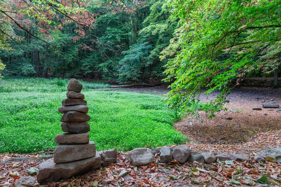 Autumn Dry Pond Beauty In Nature Day Forest Green Color Land No People Non-urban Scene Outdoors Rock Stone Stone - Object Tranquil Scene Tranquility Tree