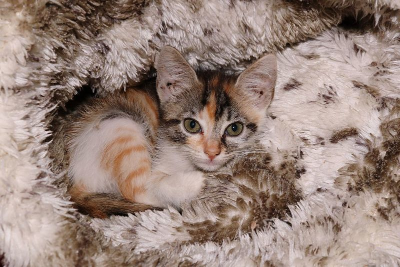 High angle view portrait of kitten amidst artificial fur