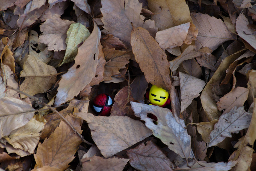 Plant Part Leaf Leaves Autumn Dry No People Day Nature Animal Outdoors Change Animal Themes High Angle View Yellow Close-up One Animal Animal Wildlife Falling Toy Insect