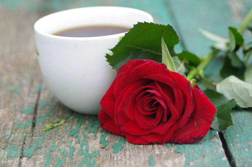 Coffee Coffee, Old Board Rose, Wood. Bench, Water, People, Background, Cold, Filter, B&w Green, Wood. Beauty In Nature Cup. Drink Flower Food And Drink Fragility Freshness Indoors  Nature Petal Red Red Rose Refreshment Rose - Flower