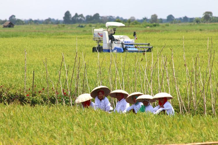 Asian traditional hat Capture Tomorrow Men Rural Scene Working Farmer Occupation Farm Worker Agriculture Field Teamwork Rice Paddy Rice - Cereal Plant Tractor Agricultural Equipment Asian Style Conical Hat Irrigation Equipment Agricultural Machinery
