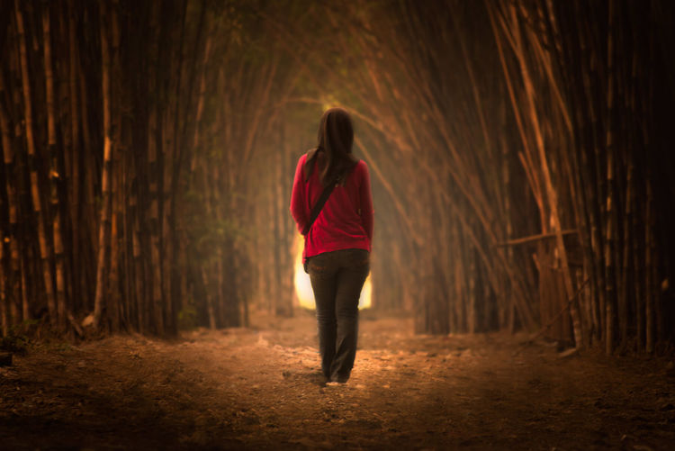 Rear View Of Woman Walking In Forest At Night