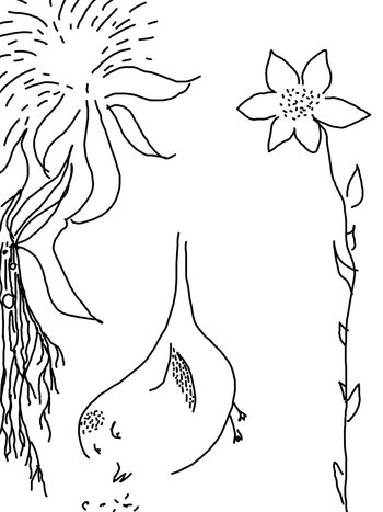 Art, Drawing, Creativity My Creativity Selbermachen Malerei Kunst Malen ArtWork Creativity Output Selfmade Art check out album M. KATSCHNI Black And White Black & White Blackandwhite Schwarzweiß Schwarz & Weiß Schwarz Weiss Black Drawing Bird Vogel Beautifully Organized Flower