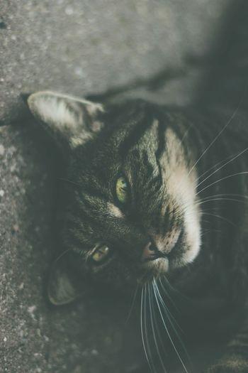 What I Value Cat Pet