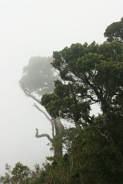 Tree Nature No People Growth Beauty In Nature Fog Foggy Foggy Morning Worlds End Horton Plains Sri Lanka The Great Outdoors - 2017 EyeEm Awards Lost In The Landscape Perspectives On Nature