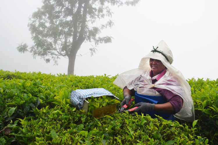 Portrait of woman working in a tea plantation