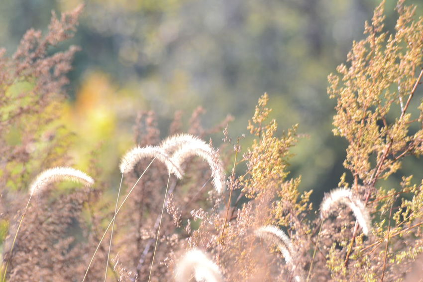 Nature Plant Growth Beauty In Nature No People Outdoors Day Tranquility Uncultivated Close-up Grass Sky Freshness The Week On EyeEm The Great Outdoors - 2018 EyeEm Awards Autumn Mood