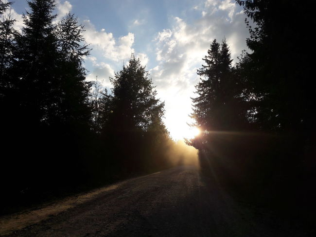 Rays of light Tree Sun Sunlight Tranquil Scene Sky Conifer  Conifer  Rays Road Woods Clouds Sunset Sunrise Forest Landscape Light Dust Fog Gravel