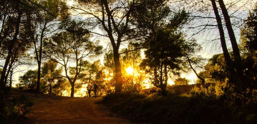 Trees on landscape against sunset sky