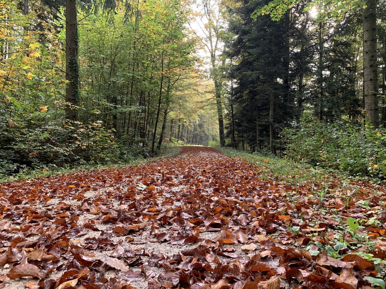 SURFACE LEVEL OF AUTUMN LEAVES IN FOREST