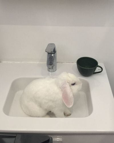 View of white horse in bathroom