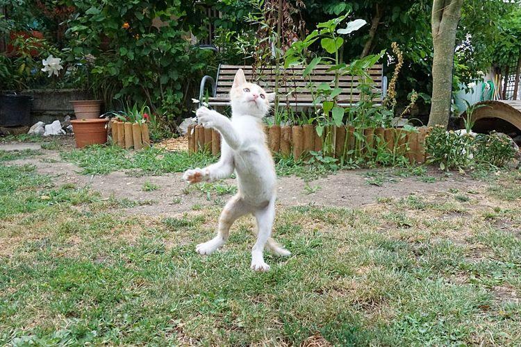 Cat standing in backyard