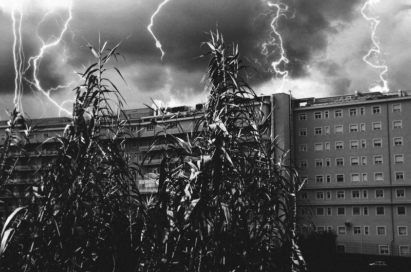 Thunderstorm in Tivoli Blackandwhite Bolt Clouds Flats Fulmination Italy Lazio Lightning Linas Was Here Storm Thunder Thunderstorm Weather The Creative - 2018 EyeEm Awards