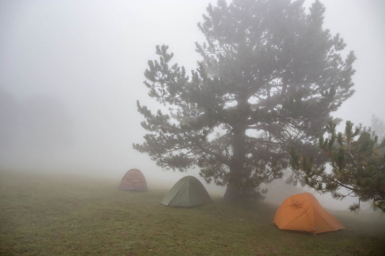 Fog Plant Tree Tent Nature Land Sky Beauty In Nature Camping Field Tranquility Tranquil Scene Environment Day Landscape No People Grass Outdoors Growth