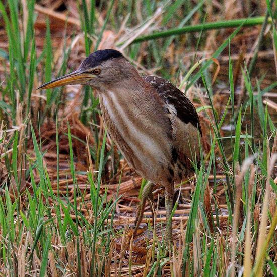 Side view of a bird in a field