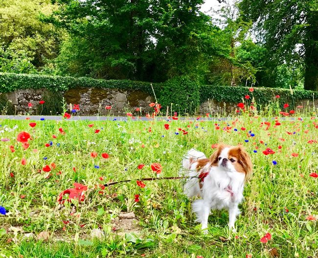 Wildflowers and a wonderful dog named Maggie! Dog Flower Growth Plant Grass Nature Pets Tree Field Outdoors Day Animal Themes Domestic Animals No People Beauty In Nature Mammal Freshness Ireland EyeEmNewHere Postcode Postcards