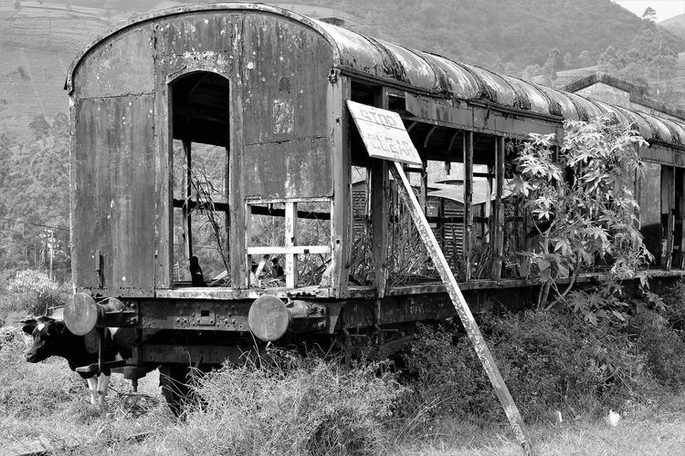 Abandoned Architecture Building Exterior Built Structure Day Grass No People Old-fashioned Outdoors Steam Train