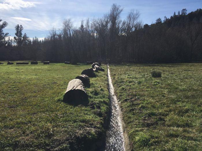 Landscape Drainage Ditch Stream Grass Quail Hollow Ben Lomond California